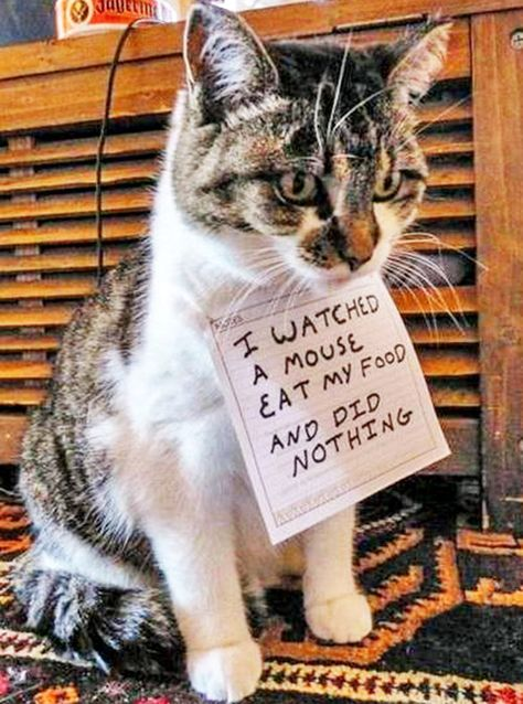 cat shaming at its best LOL I thought this should go under this CATegory