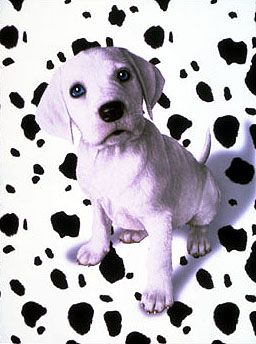102 Dalmatians Dalmatian Dog Love Dogs Puppies