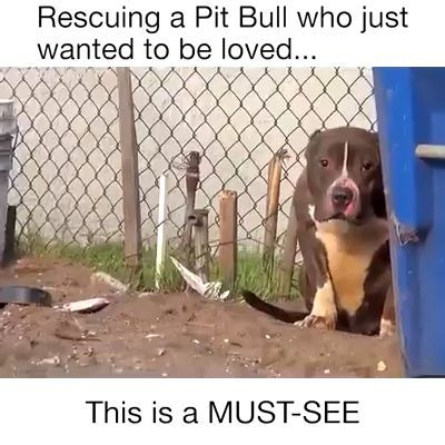 Kind Guys Rescued The Pit Bull Dog ❤️