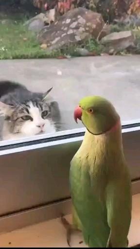And it's so lovely! ❤️ #cat #peekaboo #petlife #kitten #pet #parrot
