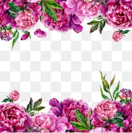 Flower Png Vector Psd And Clipart With Transparent Background For Free Download Pngtree Free Watercolor Flowers Flowers Border Flower Png Images