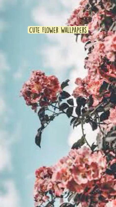 Cute Flower Wallpapers