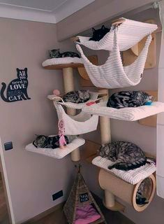 Cute Archiparti How To Add A Pet Room To Tiny Home Click To Learn Ideas Of Cat Small Spaces Wall Outdoor Indoor De In 2020 Cat Room Decor Cat House Diy Cat Room
