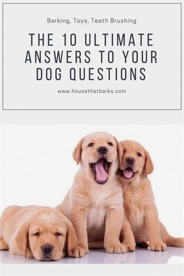 Dog Training In Your Home Dog Training York Dog Training Cesar