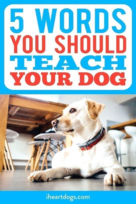 Dog Training Audio Books Teamworks Dog Training Youngsville Nc