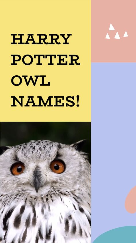 Harry Potter Owl Names An Immersive Guide By Petshoper Pet Names Pet Info You Could Ever Need At One Place