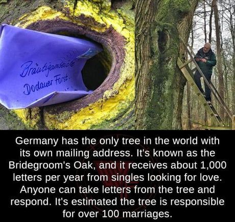 Germany has the only tree in the world with its own mailing address. It's known as the Bridegroom's Oak, and it receives about letters per year from singles looking for love. Anyone can take letters from the tree and respond. It's estimated the tree The More You Know, Good To Know, Did You Know, Cool Places To Visit, Places To Travel, Wtf Fun Facts, Random Facts, Random Stuff, Funny Facts