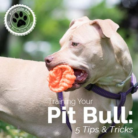 Top 12 Foods Your Dog Should Never Eat Dog Training Pitbull