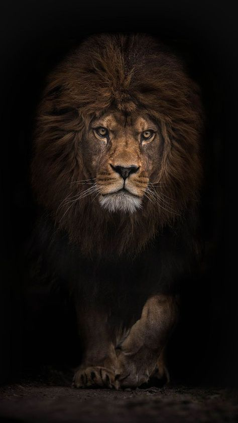 Fractal Animal Tumblr Abstract Lion Hd Wallpaper Background Lion
