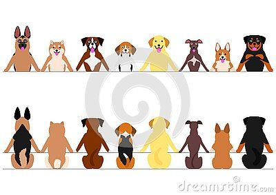 Various Dogs In A Row Front And Rear View Standing And Sitting All Animals Images Smiling Dogs Free Vector Art