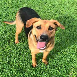 Available Pets At Galveston County Animal Resource Center In Texas