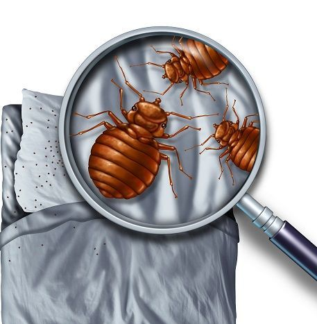 Discover The Best Thermal Remediation And Bed Bug Heaters For Sale
