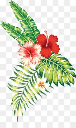 Tropical Png Tropical Flower Tropical Leaves Tropical Flowers Tropical Leaf Tropical Fruit Tropical Fish Plant Drawing Tropical Flowers Digital Flowers