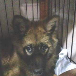 大阪府の犬 雑種 里親募集です 生後5ヶ月の男の子 穏やかで優しい子です 募集番号 207989 是非 里親になるという犬の入手方法もご検討下さい 犬 里親 ワンコ