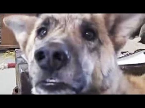 Talking Dogs A Funny Talking Dog Videos Compilation 2016 Funny
