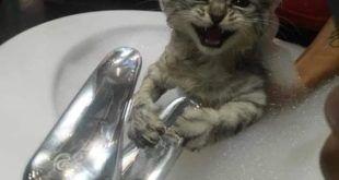 32 Wahnsinnig Purrfekte Katzen Meme Um Samstag Auf Die Richtige