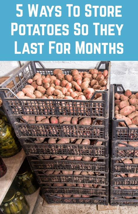 5 Ways To Store Potatoes So They Last For Months - Whether you've grown an abundance of potatoes, or you've got too excited at the farmers' mark - Canning Food Preservation, Preserving Food, How To Store Potatoes, Storing Potatoes, Can You Freeze Potatoes, Freezing Potatoes, Storing Onions, Canned Food Storage, Canning Jar Storage