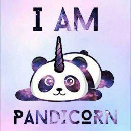 Vivirinski In 2021 Panda Drawing Panda Wallpapers Panda Art