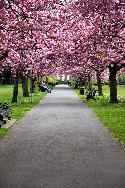 Cherry Blossom Pathway In London England Uk London Visit London Greenwich Park