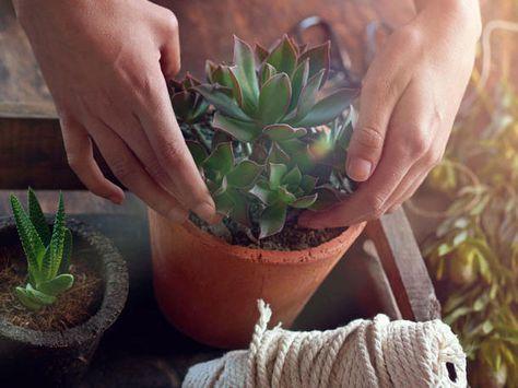 Diese Pflanzen solltest du im Schlafzimmer haben   Gesundheit ...