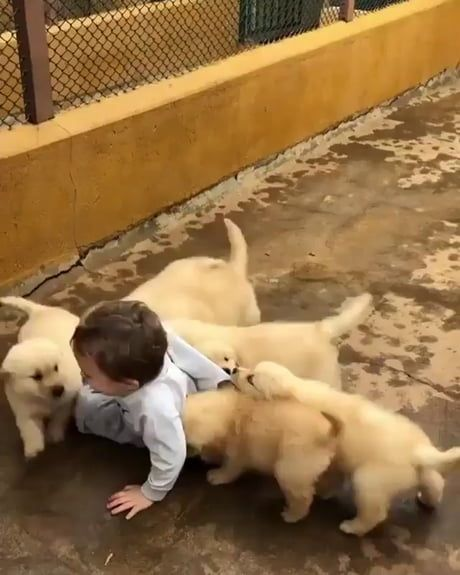 Let Us Love You Tiny Hooman Funny Animal Videos Cute Puppies And Kittens Funny Cute Cats