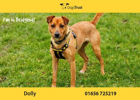Dolly Is A Sensitive Girl From Canterbury She Has Had A Unsettled Start And Now Needs A Secure And Consistent Home To Help Her Re Dogs Dogs Trust Dog Training