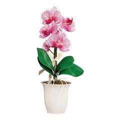 orchidee leroy merlin
