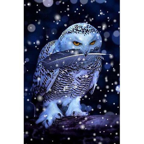 2017 Diy diamond painting snow owl Square Full rhinestones drill cross-stitch kits diamond embroidery BK-4022. Yesterday's price: US $10.80 (9.38 EUR). Today's price: US $7.02 (6.06 EUR). Discount: 35%.