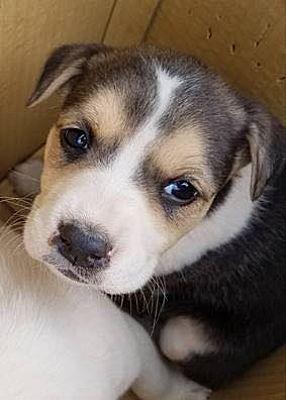 New York Ny Hound Unknown Type Meet Marsha A Pet For Adoption Dog Adoption Pet Adoption Dog Rocks
