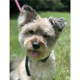 Rescue Spotlight Col Potter Cairn Rescue Network Dog Cancer