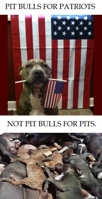 Pin By Aymee Laurain On Bsl Is Bs Breed Specific Legislation