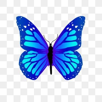 Download Butterfly Wings Png Hd Png Gif Base Butterfly Wings Butterfly Fairy Wings Wings Png