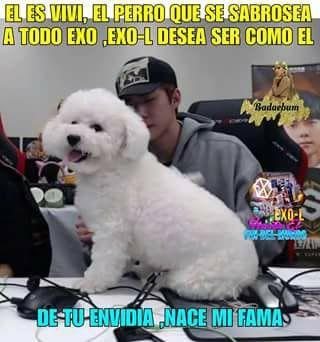 Imagen Relacionada Animals Dogs Memes