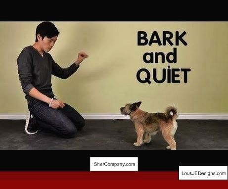 How To Train Your Dog To Stay By Your Side Without A Leash And