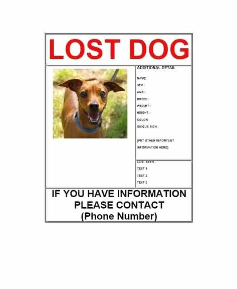 Pet Flyer Templates Free Missing Dog Flyer Template Found
