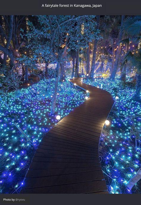 A fairtytale forest...