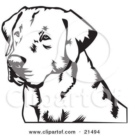 Clipart Illustration of a Labrador Retriever Dogs Face Looking