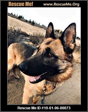 Oregon German Shepherd Rescue Adoptions Rescue Me German