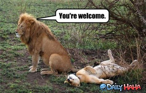 Funny pictures about Alpha male. Oh, and cool pics about Alpha male. Also, Alpha male photos.