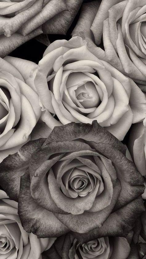 Epingle Par Meilamouette Sur Fond Ecran Fond D Ecran Fleur Blanche Papier Peint Rose Fond D Ecran Noir Et Blanc