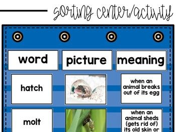 Life Cycles Vocabulary Match Up Activity Life Cycles Vocabulary Science Lessons