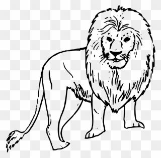 Hd Image Of A Black And White Lion Wild Animals Drawing Easy Clipart Black And White Lion Lion Art Wild Animals Drawing