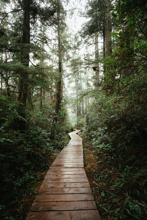 Book This Epic Adventure To Hot Springs Cove In Tofino, Vancouver Island