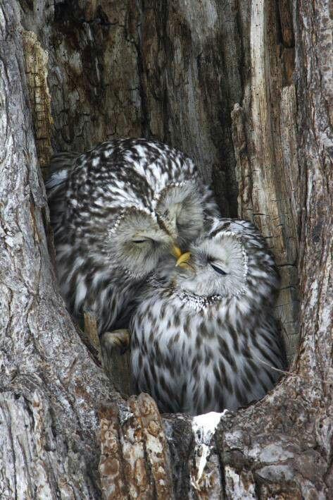 owl EZO