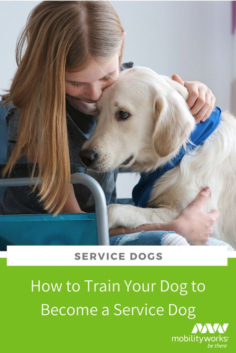 How To Train Your Dog To Become A Service Dog Training Your Dog
