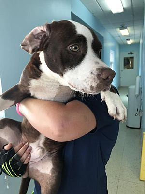 Fort Myers Fl Mixed Breed Medium Meet Porter A Dog For