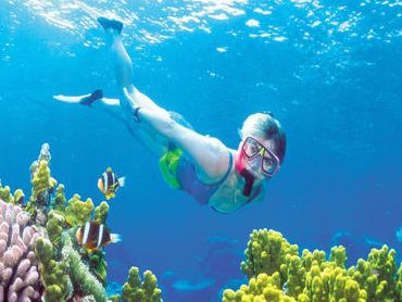 Some of the best spots to go snorkeling are the Pompano Beach Dropoff, Vista Park Reef, Hollywood North Beach Park, Crandon Park and the Yankee Clipper Rocks.