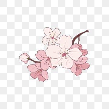 ثوب قرنفلي اللون إزهار الكرز أبيض رسم كاريكتوري تصوير إزهار الكرز تصوير أزهر تصوير أزهر تصوير أزهر كرز جميل الوردي الأبيض الربيع إزهار الكرز قصاصات ف Cherry Blossoms Illustration Illustration Flower