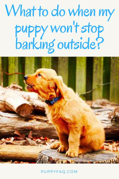 Got A Puppy Or Dog That Won T Stop Barking For Attention Outside