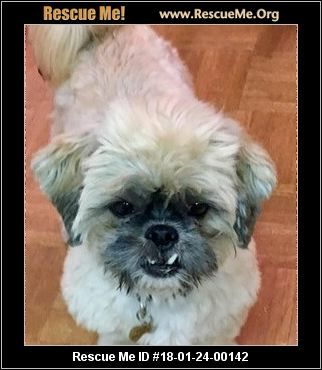 Click Here To View Shih Tzu Dogs For Adoption Or Post One In Need